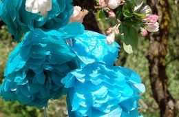 bright blue tissue paper flowers hanging from a branch of apple blossoms - photo by Flickr user Kathryn Decker