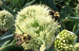 Bee pollinating a flower.