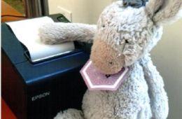photo of stuffed animal with receipt printer; photo credit Nora Hale