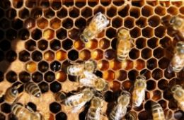 photo of bees from Uncle Jer's Bee Show website
