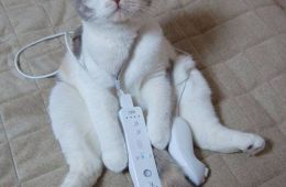 Cat holding a Wii controller. Photo courtesy of Flickr user ColKorn1982