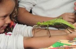 photo of smiling girl with large grasshopper on her arms