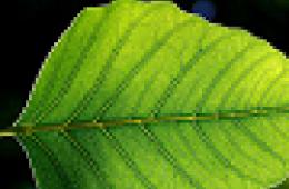 leaf image thumbnail