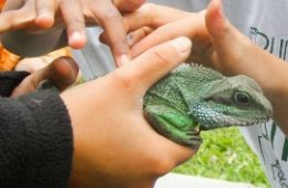 photo of hands petting a reptile