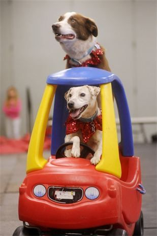photo of dogs doing tricks from Busy Bee Dog program