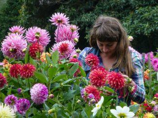 alexis in dahlia garden