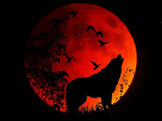 Animal Wold Moon Night Full Moon Mystical Howl
