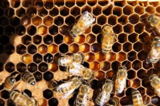 photo of bees in beehive