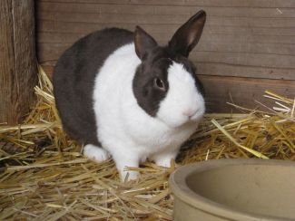 photo of a black and white bunny sitting in the hay