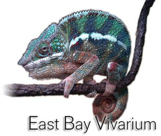 photo of reptile from East Bay Vivarium