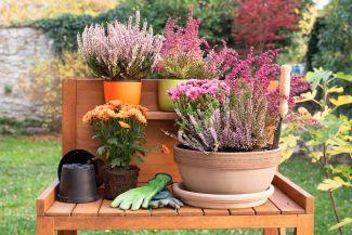 Autumn plants on a table