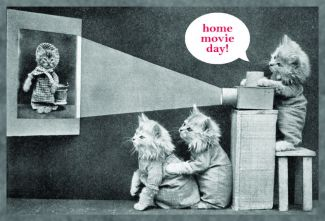 kittens watching home movies