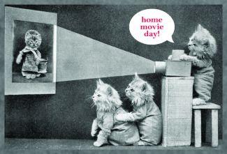 kittens watching home movies