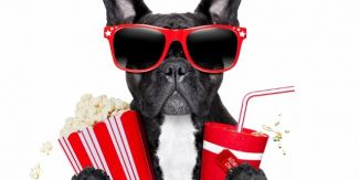 Dog with shades, popcorn and cola