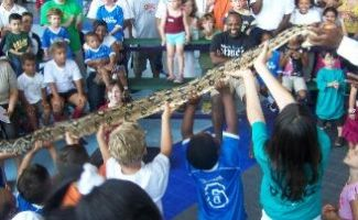 A line of kids holding up a very large snake to an audience of other kids