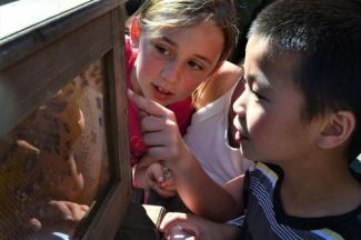 two children looking at bees in a frame