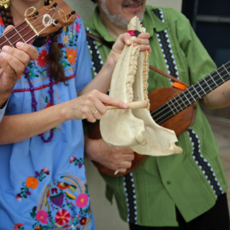 close up of one of the members of Cascada de Flores playing a jawbone