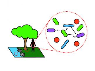 bacterial ecology image