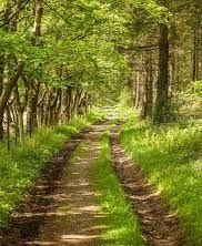 A path through a forest