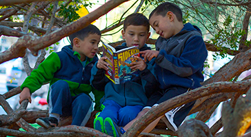 Boys reading book in tree